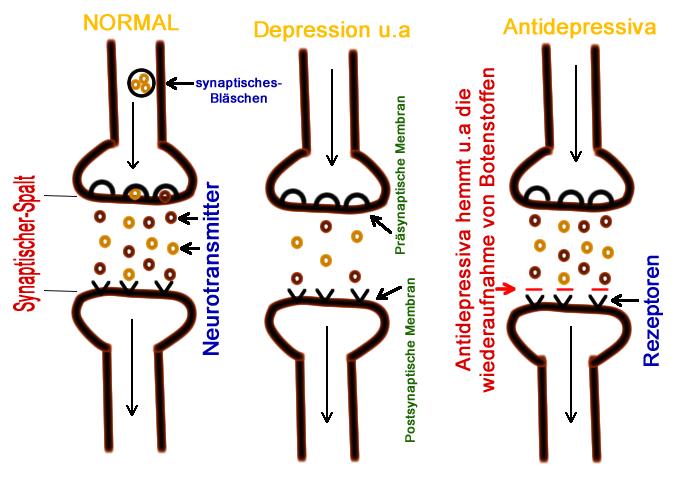 Grafik zeigt die wirkunsweise von antidepressiva