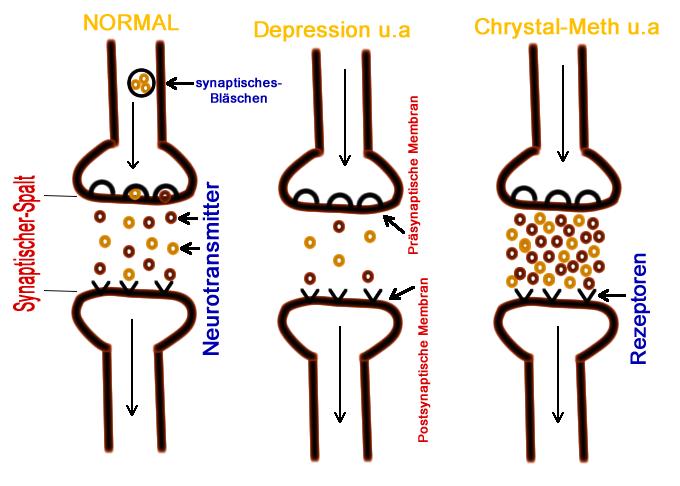 grafik zeigt synaptische uebertragung ueber die neurotransmitter