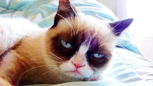 eine sehr sehr muede blickende katze