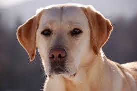 suesser hund