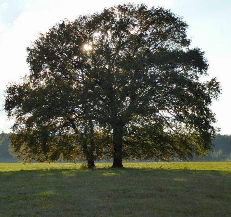 Bild von Baum